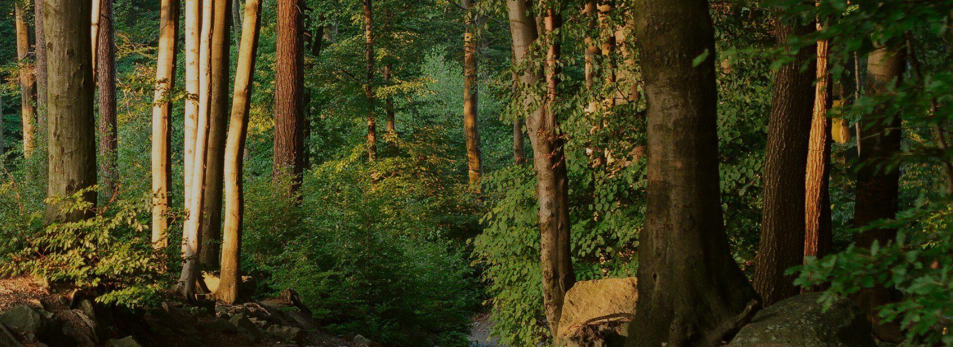 Zespół Szkół Leśnych w Biłgoraju